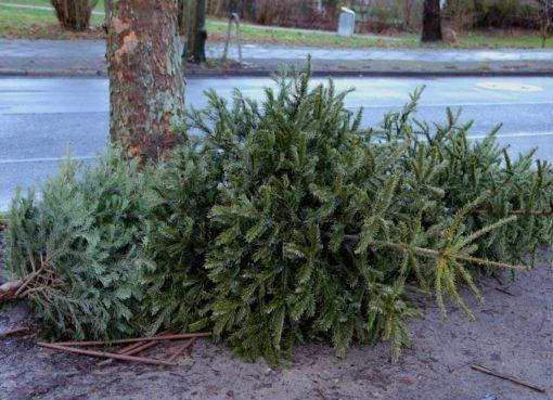 BSR Weihnachtsbaum-Entsorgung